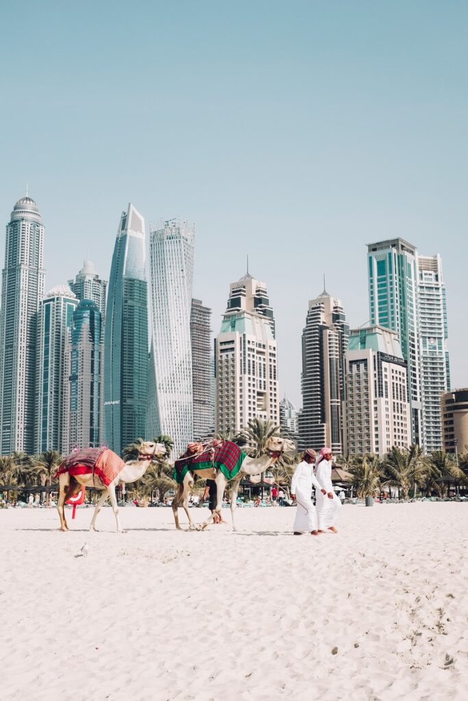 camels on beach sands